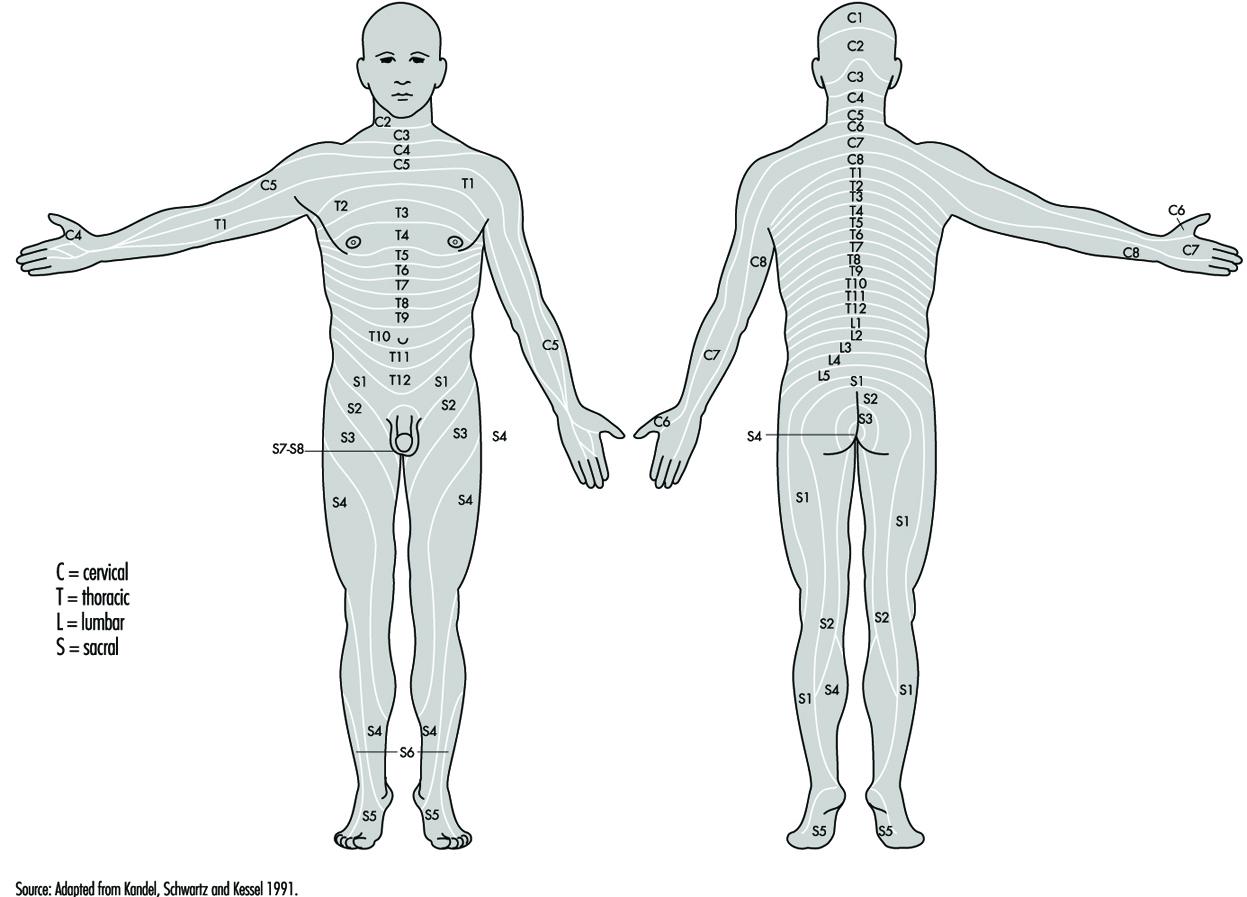 7 Nervous System